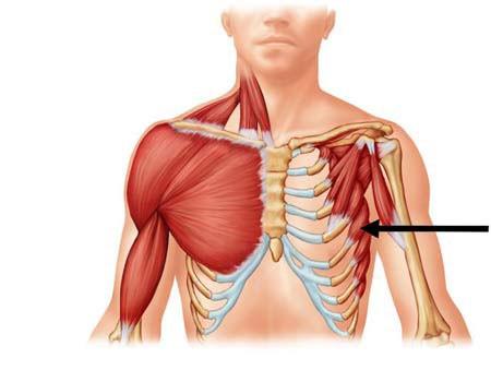 Jak ćwiczyć mięśnie głębokie?